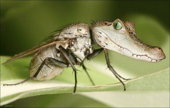 Génie, exauce mon voeu ! - Page 10 Alligator-fly