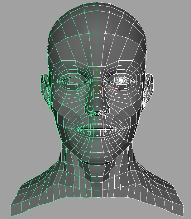 Human Face Geometry
