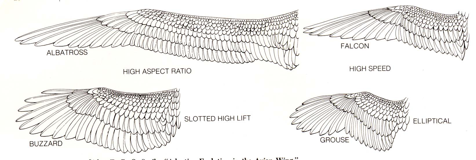 index of courses cse460 00sp final referencegeneral bird Diagram of Herb wing design types 01